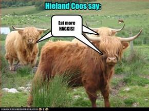 Hieland Coos say: