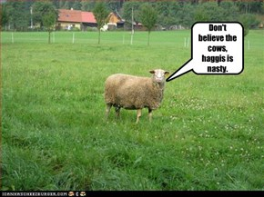 Don't believe the cows, haggis is nasty.
