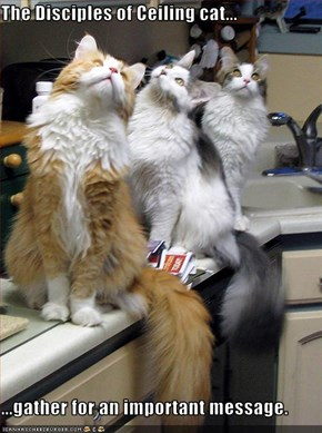 The Disciples of Ceiling cat...  ...gather for an important message.