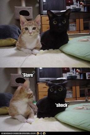 *stare*