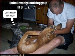 Unbelievably loud dog yelp  in 3. . . . 2. . . . 1. . . .