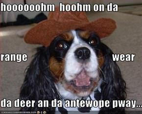 hoooooohm  hoohm on da  range                                        wear da deer an da antewope pway...