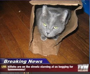 Breaking News - kittehs are on the streetz stareing at us begging for tunnnnnnnna!