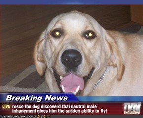 Breaking News - rosco the dog discoverd that nautral male inhancment gives him the sudden ability to fly!