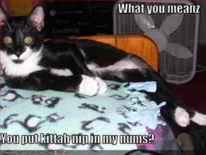 What you meanz   You put kittah nip in my nums?