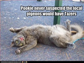 Pookie never suspected the local pigeons would have Tazers