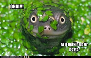 Ai iz perkin up Ur pesto.