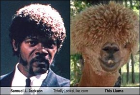 Samuel L. Jackson Totally Looks Like This Llama