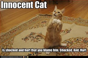 Innocent Cat