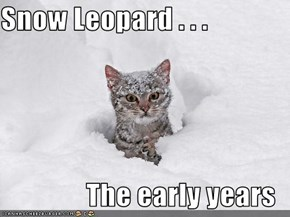 Snow Leopard . . .   The early years