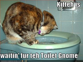 Kitteh is  waitin' fur teh Toilet Gnome
