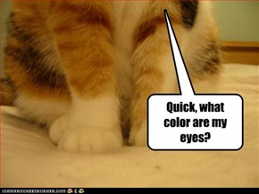 Quick, what color are my eyes?