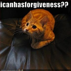 icanhasforgiveness??