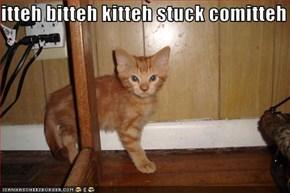 itteh bitteh kitteh stuck comitteh