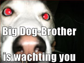 Big Dog-Brother  is wachting you