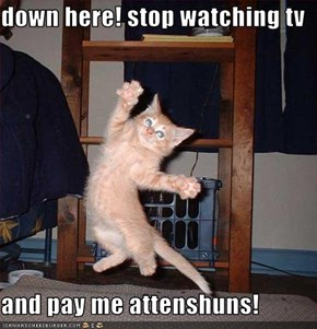 down here! stop watching tv  and pay me attenshuns!