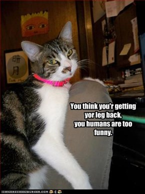 You think you'r getting yor leg back,  you humans are too funny.