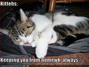 Kittehs;  Keeping you from homewk, always...