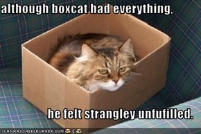 although boxcat had everything,   he felt strangley unfufilled.