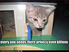 every one needs there privecy even kittens