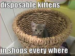 disposable kittens  in shops every where