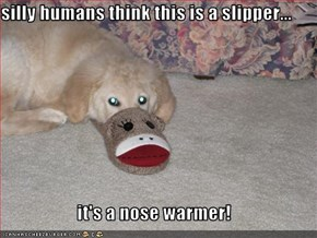 silly humans think this is a slipper...  it's a nose warmer!