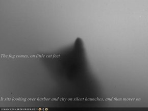The fog comes, on little cat feet It sits looking over harbor and city on silent haunches, and then moves on
