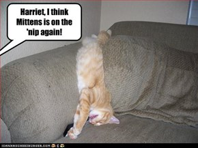 Harriet, I think Mittens is on the 'nip again!