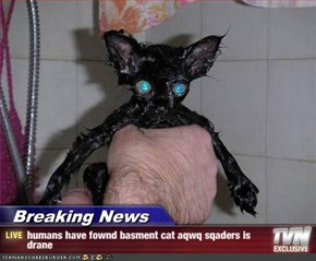 Breaking News - humans have fownd basment cat aqwq sqaders is drane