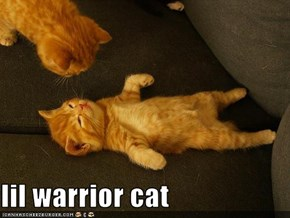 lil warrior cat