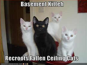 Basement Kitteh  Recroots Fallen Ceiling Cats