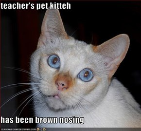 teacher's pet kitteh   has been brown nosing