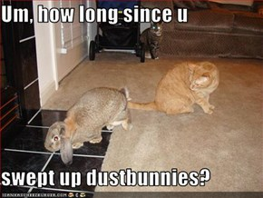 Um, how long since u   swept up dustbunnies?