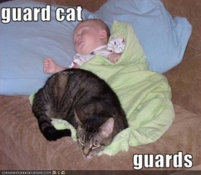 guard cat  guards