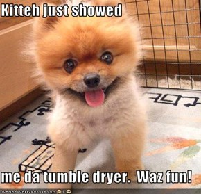 Kitteh just showed  me da tumble dryer.  Waz fun!