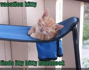vacation kitty  finds itty bitty hammock