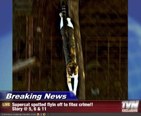 Breaking News - Supercat spotted flyin off to fitez crime!!  Story @ 5, 6 & 11