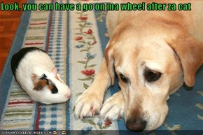 Look, you can have a go on ma wheel after za cat