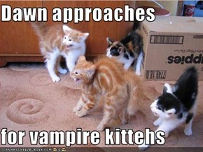 Dawn approaches   for vampire kittehs
