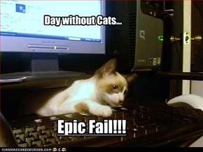 Day without Cats...