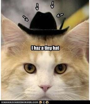 I haz a tiny hat
