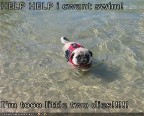 HELP HELP i cwant swim!  I'm tooo little two dies!!!!!