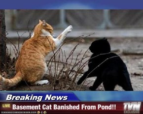 Breaking News - Basement Cat Banished From Pond!!
