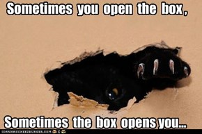 Sometimes  you  open  the  box ,