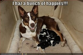 I haz a bunch of happies!!!
