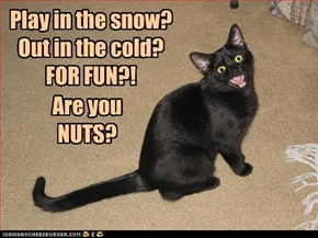 Play in the snow? Out in the cold? FOR FUN?!