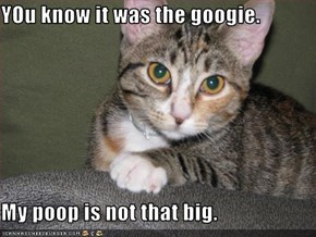 YOu know it was the googie.  My poop is not that big.