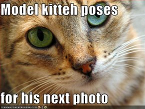 Model kitteh poses   for his next photo