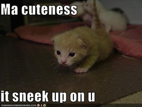 Ma cuteness  it sneek up on u