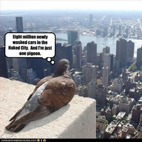Eight million newly washed cars in the Naked City.  And I'm just one pigeon.